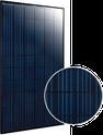 Elite Black Polycrystalline ET-P660255BB Solar Panel