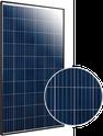 Elite Poly ET-P660260WW Solar Panel