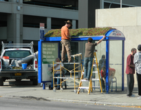 picture of Green Infrastructure - NFTA Green Bus Shelter