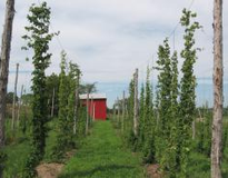 Addison Hop Farm - Addison - VT