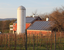 Picture of Vineyard going Solar in Loudoun County VA