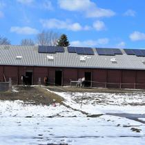 Essex Horse Farm
