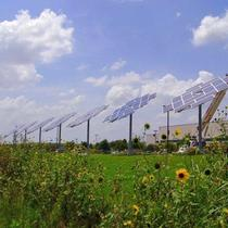 Solar Sunflowers