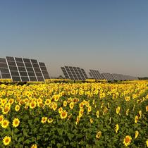 Networked Solar Farm