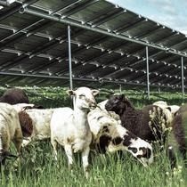 We recently launched a solar grazing program for vegetation management.